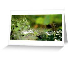 Little World Of A Tiny Spider Greeting Card