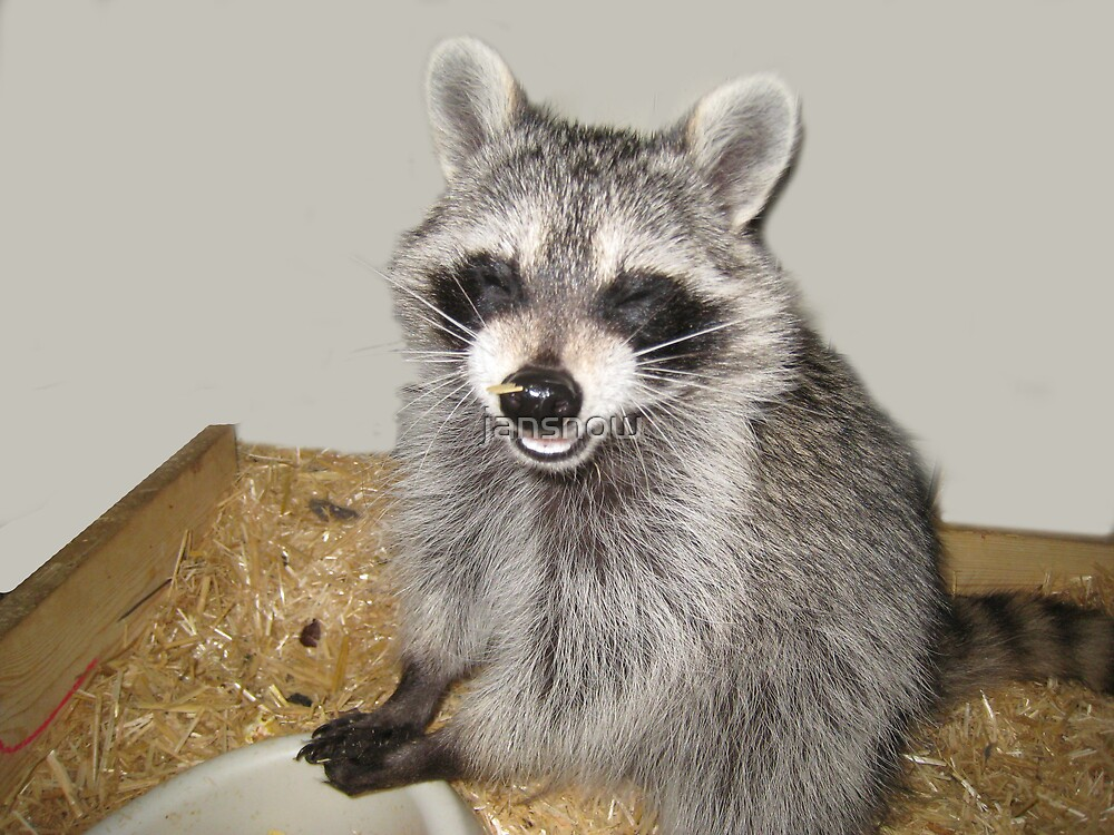 """Bandit says """"Cheese!"""" by jansnow"""