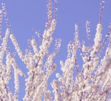 Reach for the Sky (Sakura Series I) Sticker