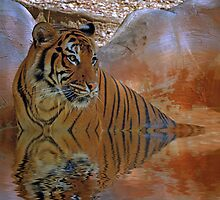 Cooling Off by Sharon Morris