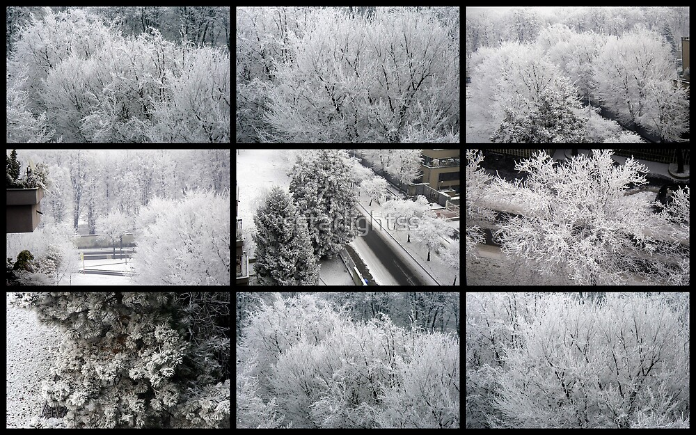 Snowy trees by sstarlightss