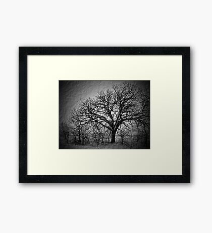Old Timey Tree Framed Print