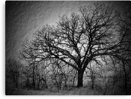 Old Timey Tree by EbelArt