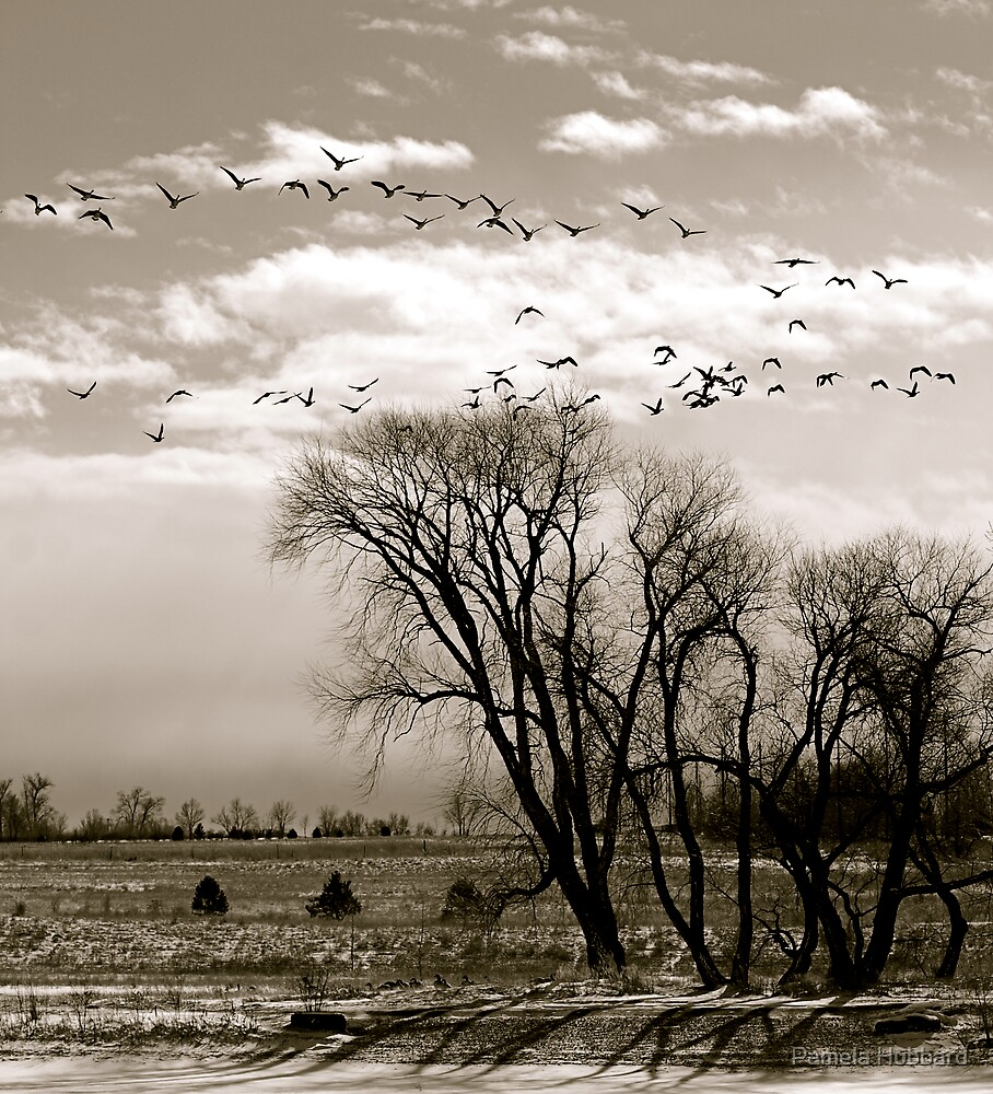 Flight by Pamela Hubbard