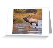 Young Bull Crossing the Madison River Greeting Card