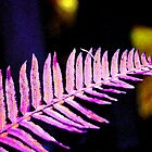 Pink Frond by Leanne  Thomas