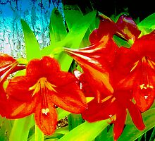 Amaryllis cluster in wide view by ♥⊱ B. Randi Bailey