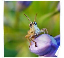 Bug Eyes Poster