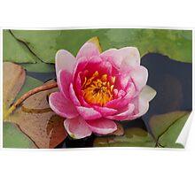 Lotus001 Poster
