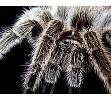 Hairy Photographic Print