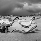Weathered by Steve Chapple