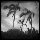Windy Weather by LisaR