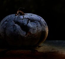 Decay by Lisa Ray