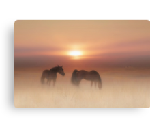 Horses in a misty dawn'... Canvas Print