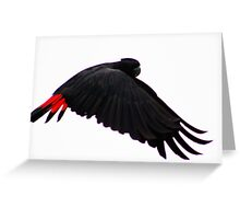 """""""Red-Tailed Black Cockatoo"""" Greeting Card"""