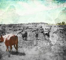 Campo by dmcart