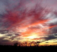 Red Feathered Evening by Petmagnet