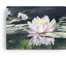 Waterlily's Canvas Print