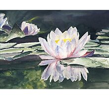 Waterlily's Photographic Print