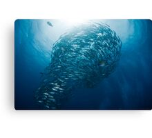 Lightbulb schooling fish Canvas Print