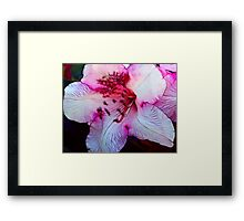 Nearly Pink Framed Print