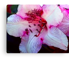 Nearly Pink Canvas Print