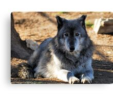 Timber Wolf - Zeus Canvas Print