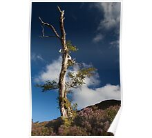lone tree by loch muick Poster