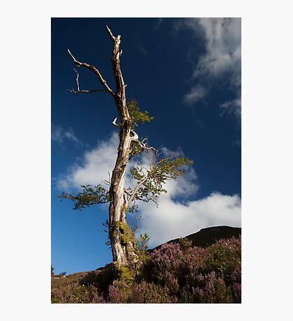 lone tree by loch muick Photographic Print
