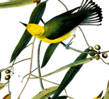 Prothonotary Warbler Sticker