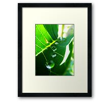 Marching Drops Framed Print
