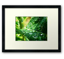Drip Drop Framed Print