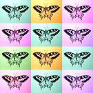 Butterfly Splendor by cathyjacobs