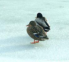 011209-119  YEAH, RIGHT...GLOBAL WARMING MY FROZEN ASS !!!!!!!! by MICKSPIXPHOTOS