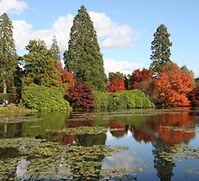 sheffield park england by odile