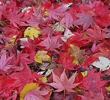 red leaves by odile