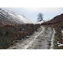 Lone Tree - Coire Earth Photographic Print