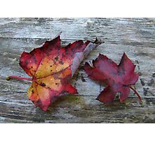Maple Leaves Photographic Print