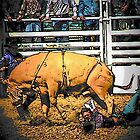 Bull Riding by Darlene Wilson