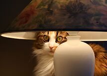 Lamp with Cat by Bodil Kristine  Fagerthun