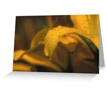 Dew Drops on a Petal Greeting Card