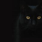 BLACK CAT by Jenifer