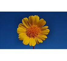 Yellow Beauty Photographic Print