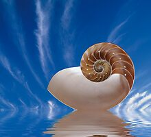Shell by Riviera