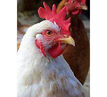 Royal Italian Chicken Photographic Print