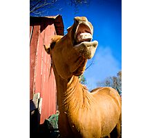 A Horse of Course! Photographic Print