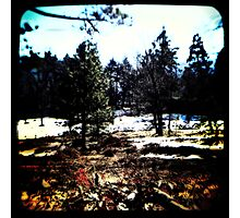 Ttv: Into The Woods Photographic Print