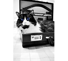 Cat at the Office Photographic Print