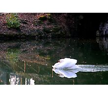 Missile? Arrow?.... no, simply Swan! Photographic Print
