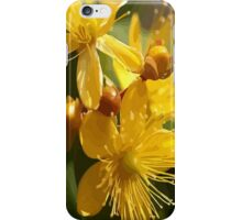 Turkish St Johns Wort Wild Flower Vector Image iPhone Case/Skin